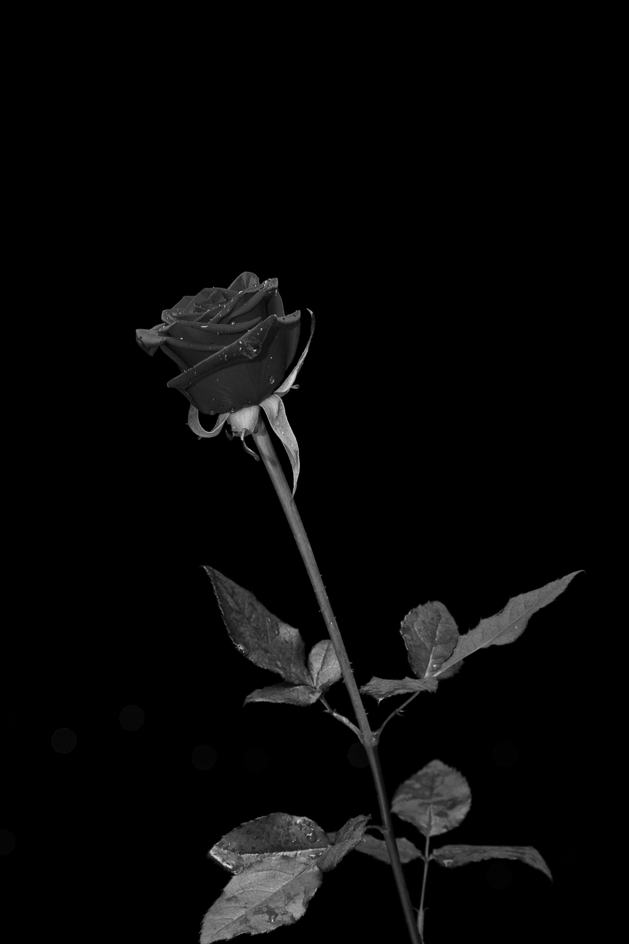 flower image in greyscale